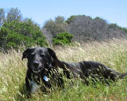 Dog on a hillside