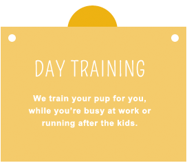 Private Day Training we train your dog for you.