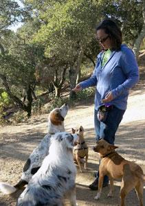 Gina training dogs