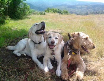 dogs resting after a walk in the hills