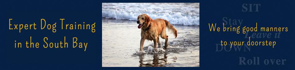 Expert Dog Training